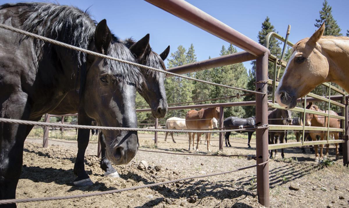 The man behind the Black Rock Ranger District horses, Jack Hatch