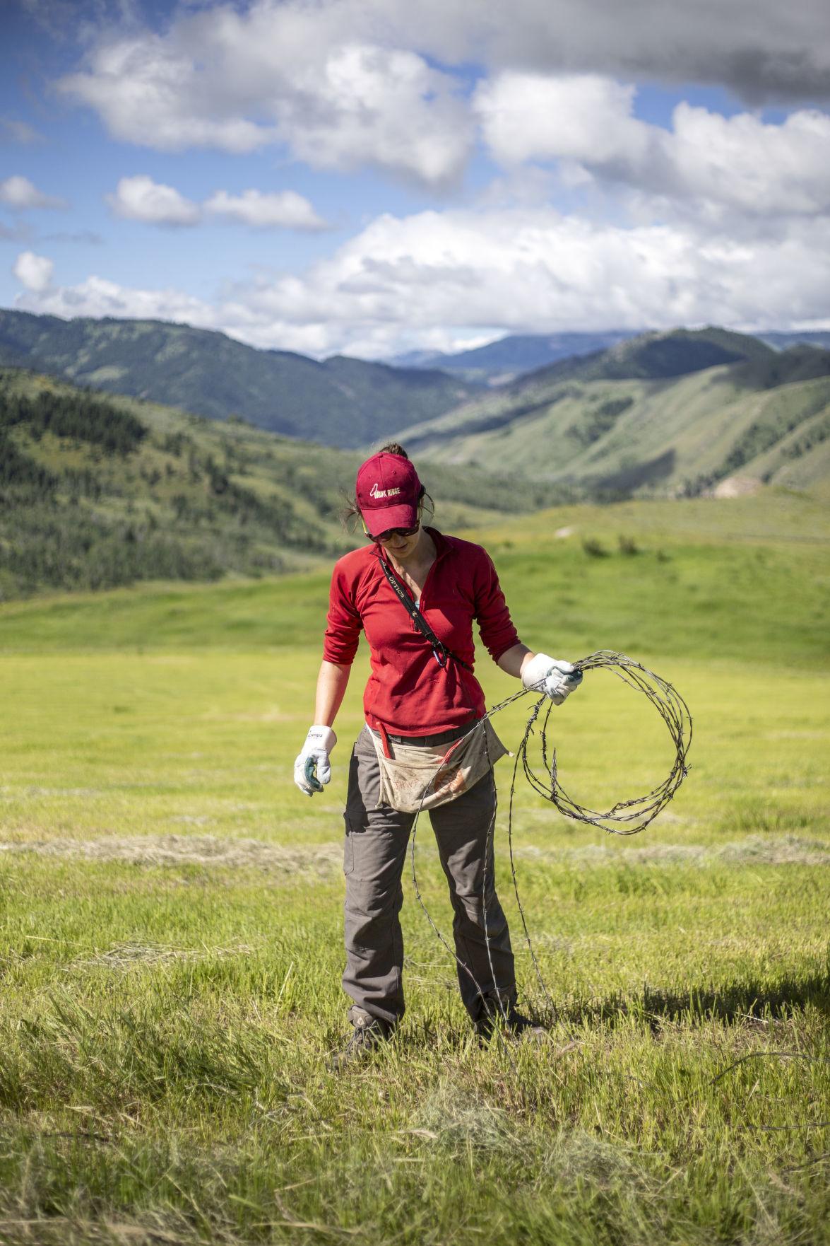 Volunteer Fence-Pullers Make Wildlife Migration Safer
