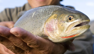 Anglers are skeptical of trout rule change