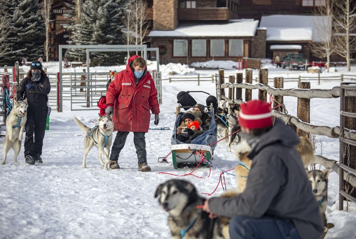 Call of the WYld Dogsled Tours