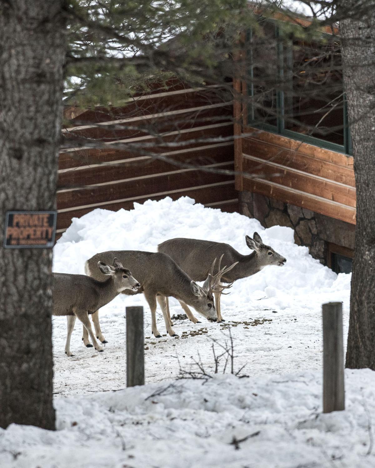 Bans don't halt wildlife feeding | Environmental