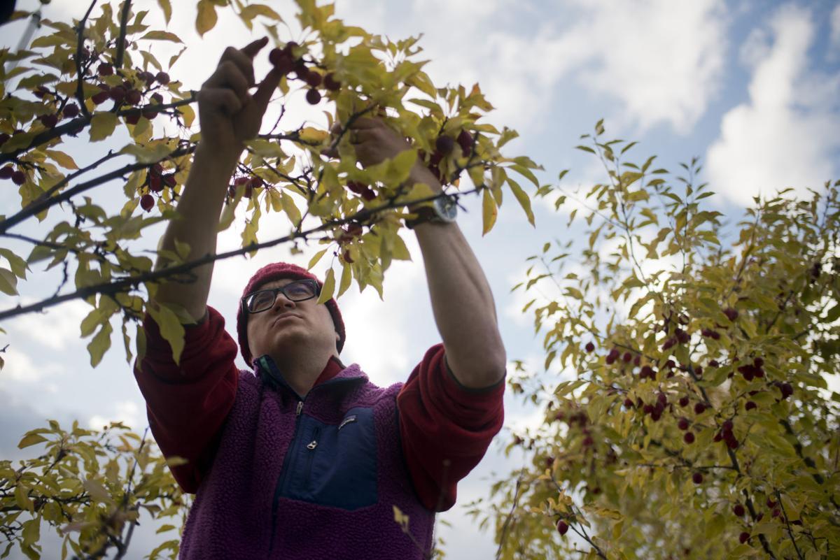 Teton Conservation District apple picking