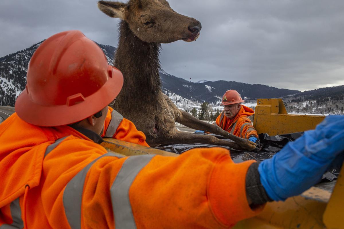 CWD reaches Jackson Hole