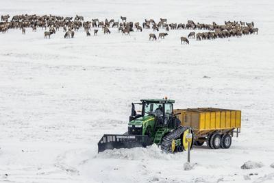 National Elk Refuge feeding