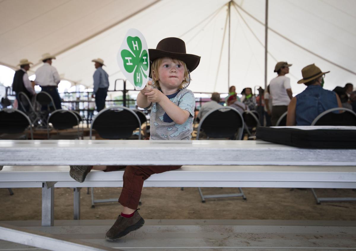 Teton County Fair livestock auction
