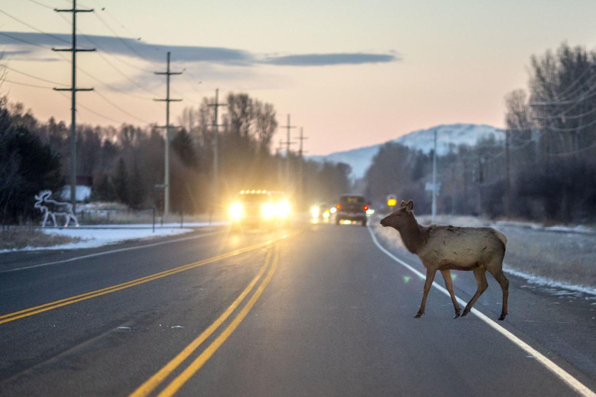 Elk crossing Village Road