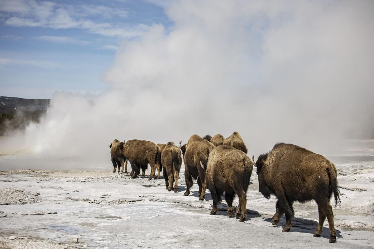 Yellowstone during off-season