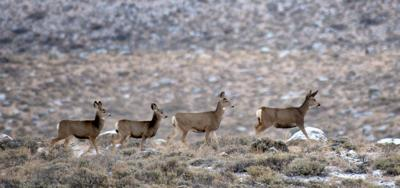 Chronic Wasting Diease