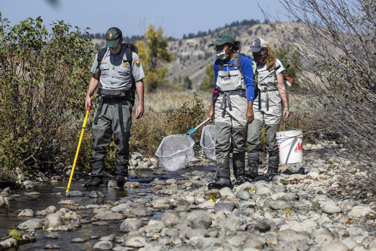 Spread Creek diversion fish salvage
