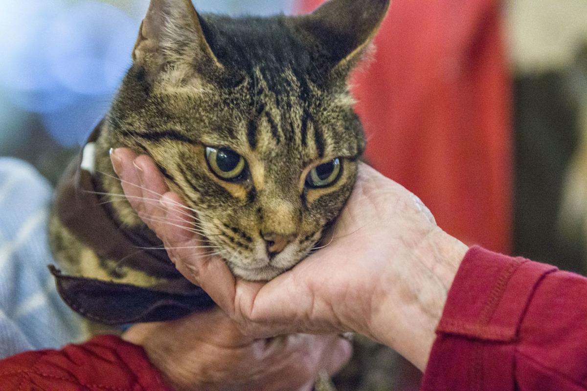 Pet Partners cat