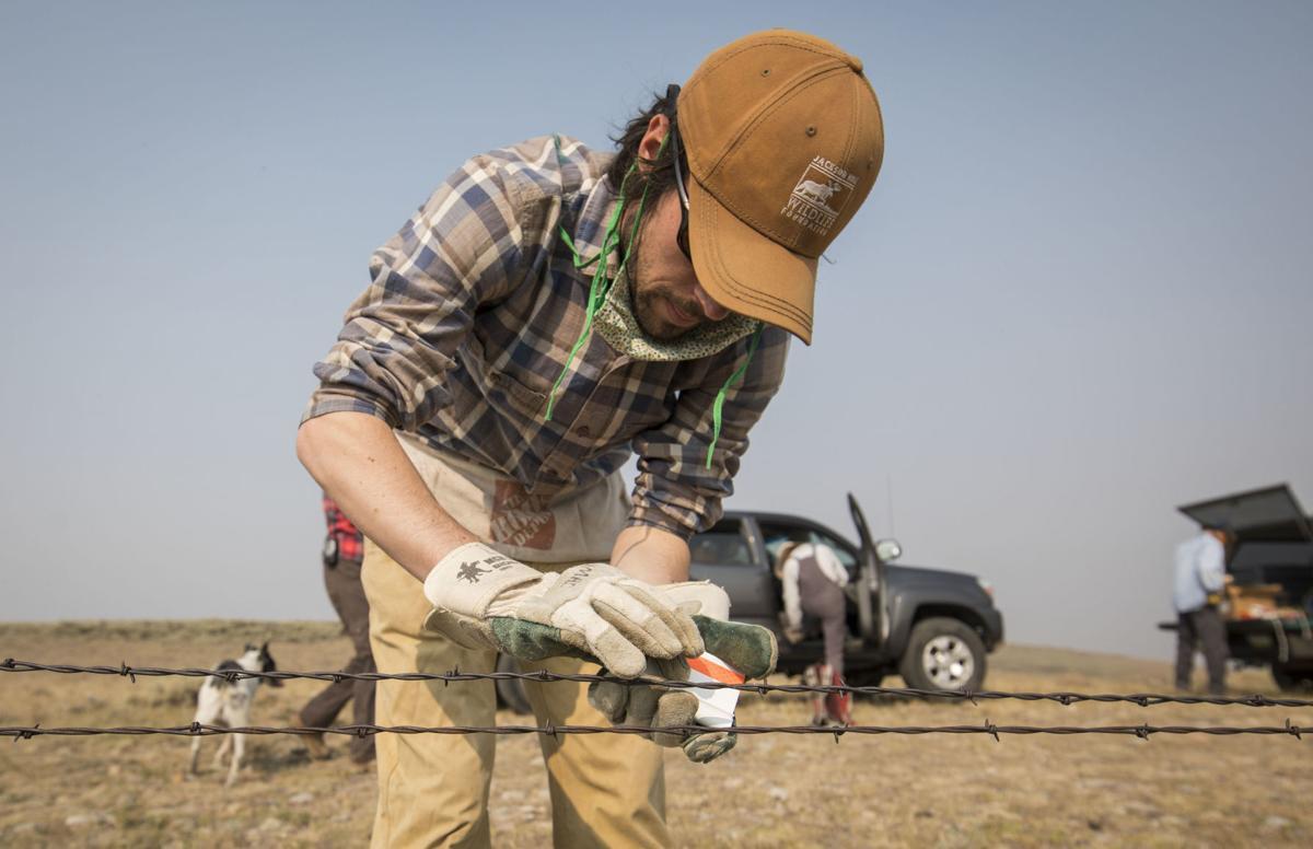 Jackson Hole Wildlife Foundation moves fence for winter to protect wildlife