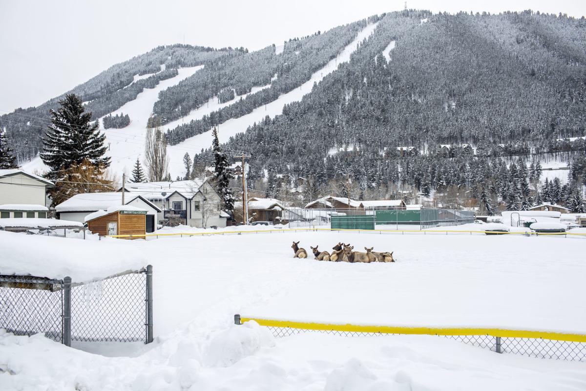 Elk at Mateosky Field
