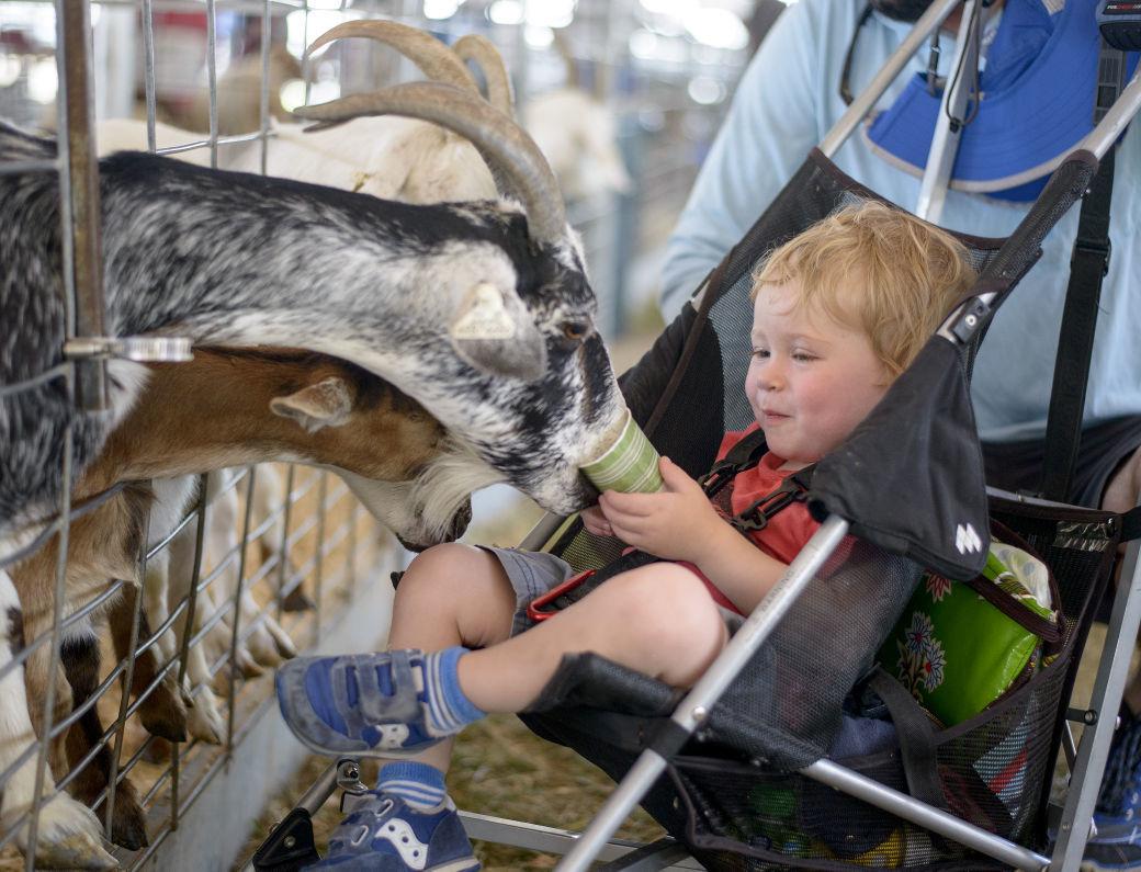 Teton County Fair - wash your hands