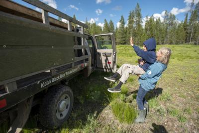 Rehab bear release