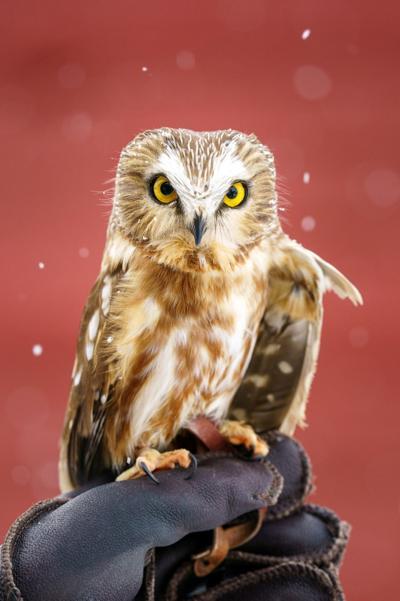 Bert the owl