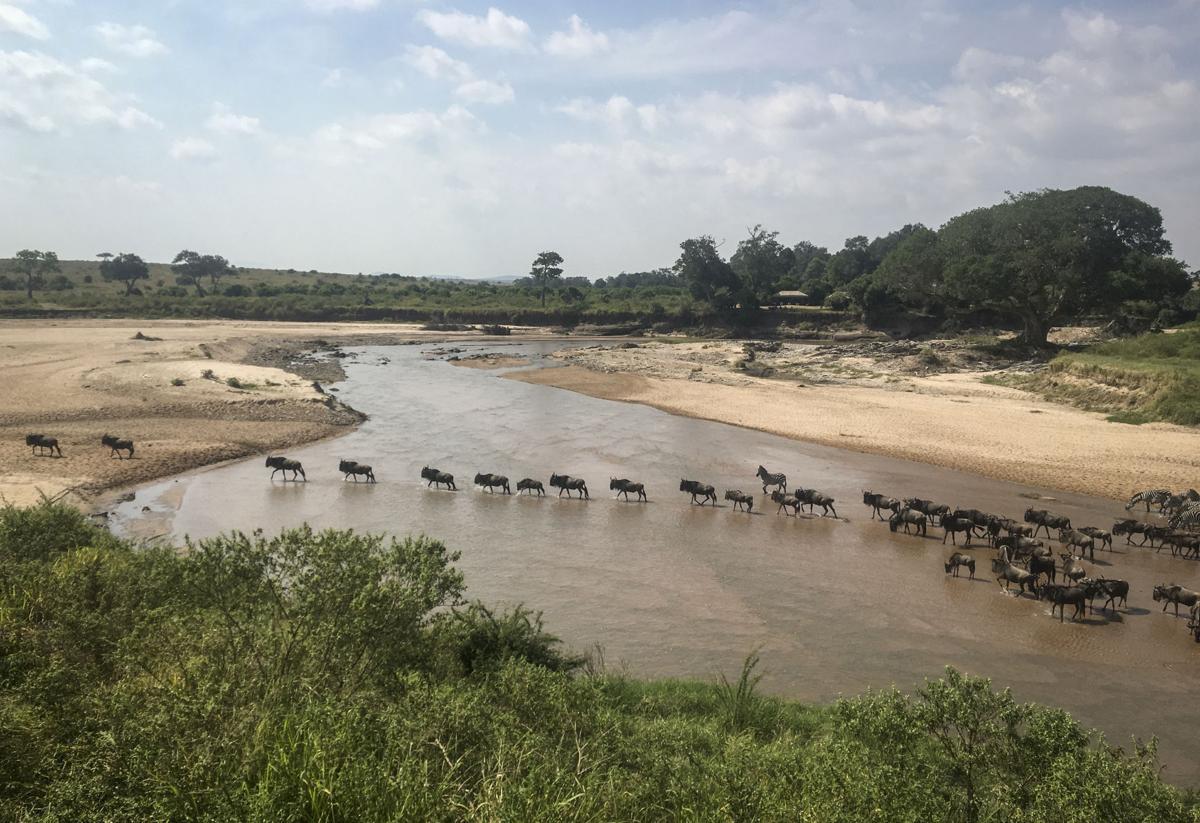 Kenya Wildebeest Migration
