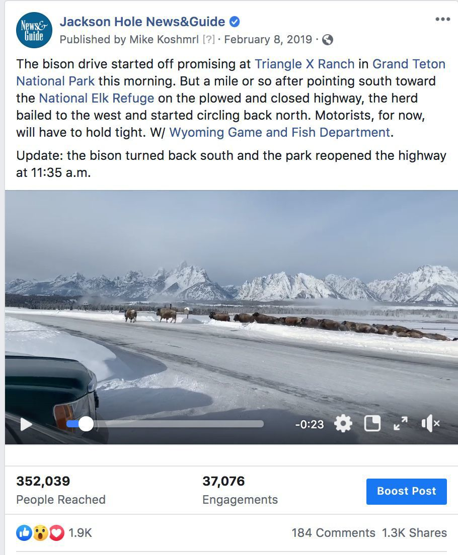 Bison drive video reaches large audience