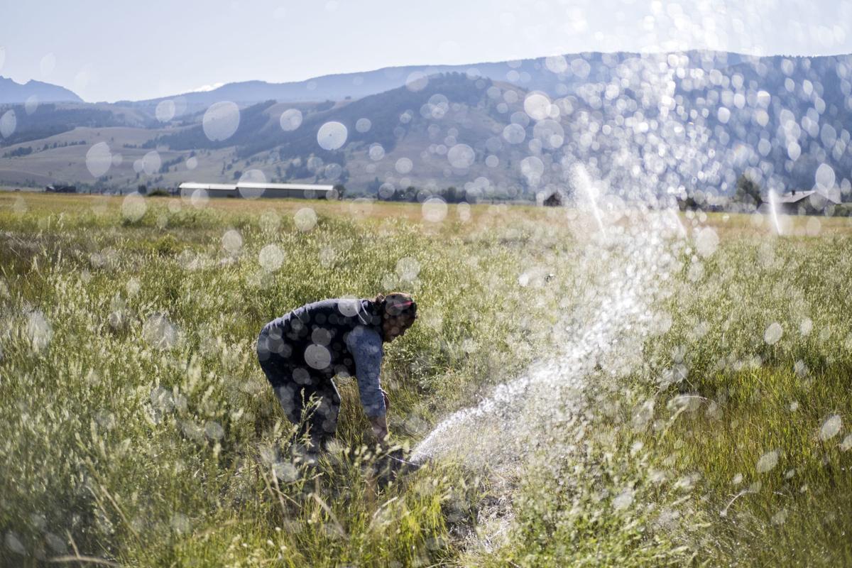National Elk Refuge irrigation