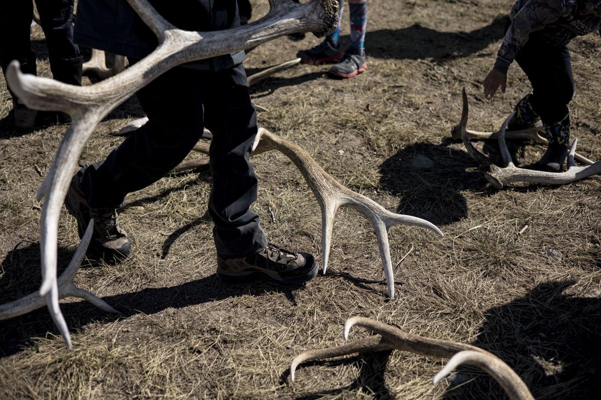 Elk antler collection