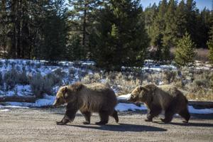 Town, county consider moves on bear-resistant trash cans