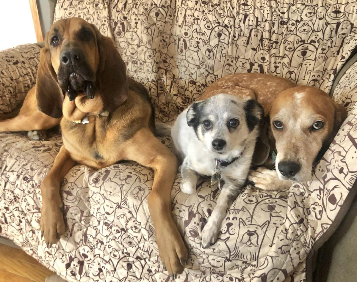 Daisy Duke, Piper and Fern