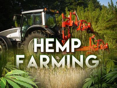 Hemp farmers waiting for delivery of seeds