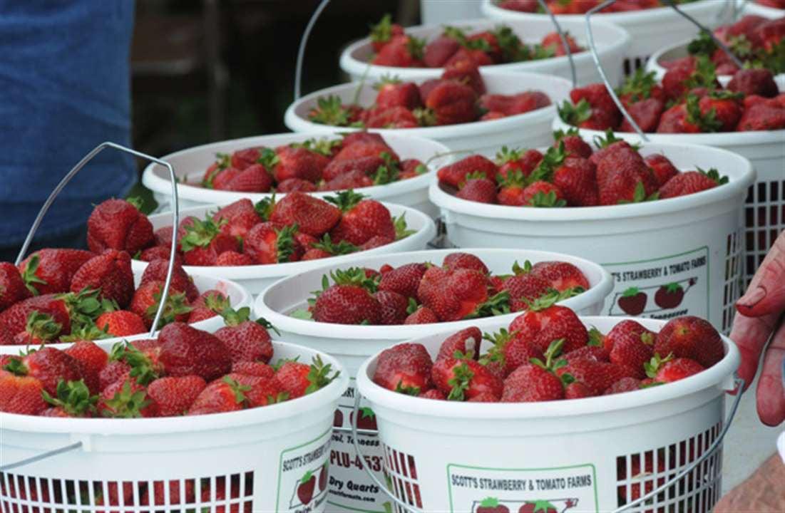 Unicoi calling all hands for 17th annual Strawberry Festival