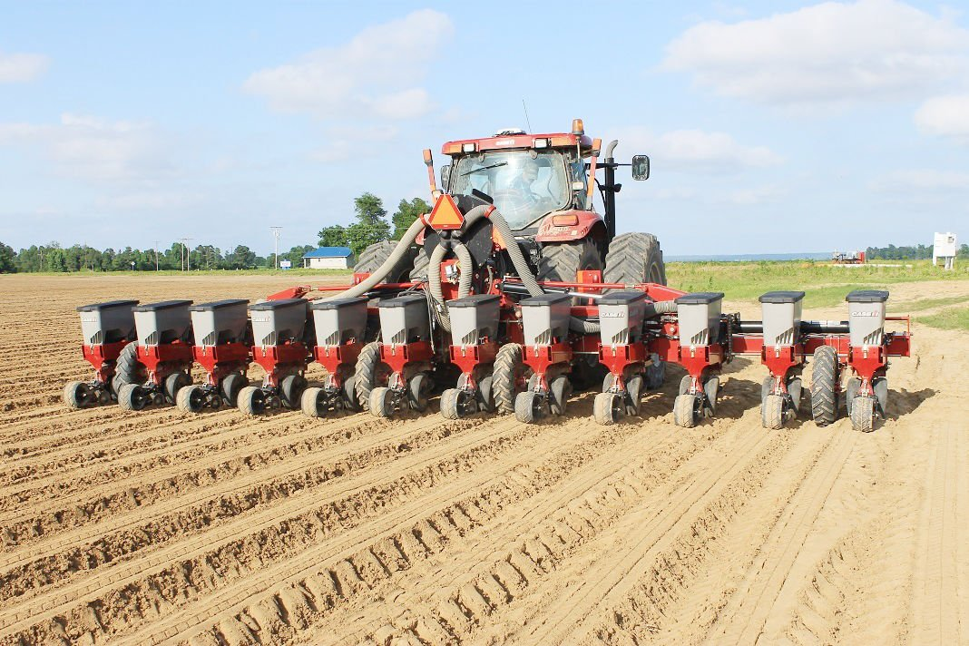 High corn prices drive more planting
