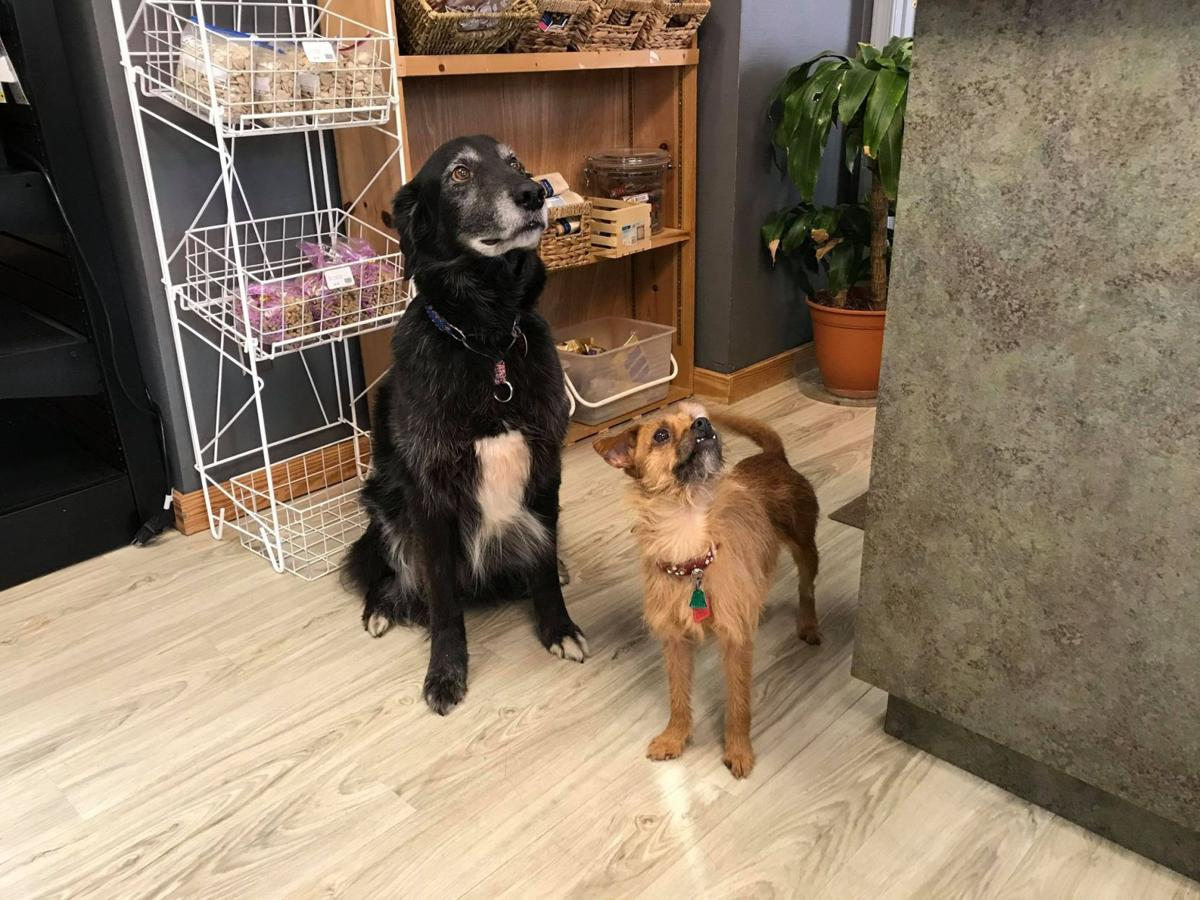 Riker and Tosh - Bentley's dogs