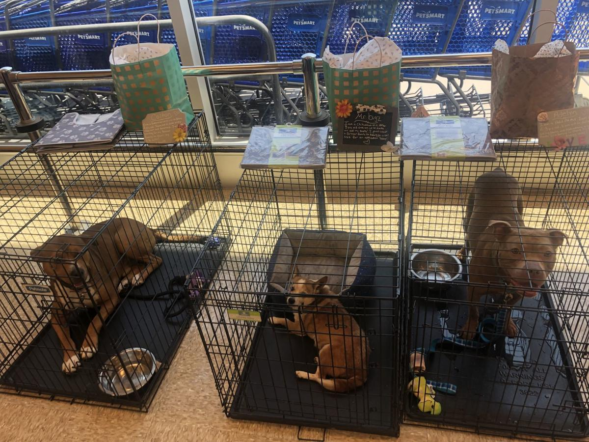 PetSmart partners with local shelters to give animals forever homes