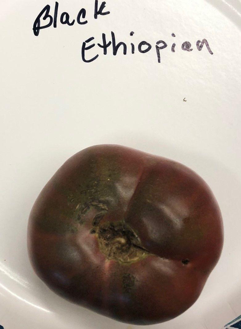 Black Ethiopian sampled