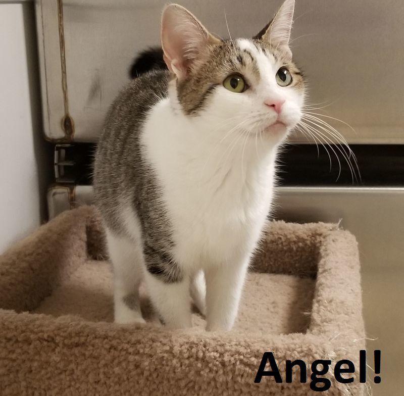 Angel_AWS.jpg