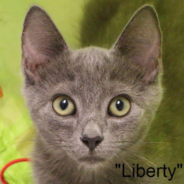 Briggs Animal Adoption Center
