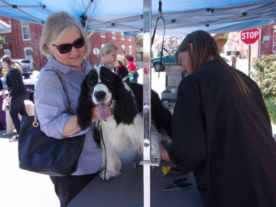 Dog days: DogFest returns to Shepherdstown on Saturday and Sunday