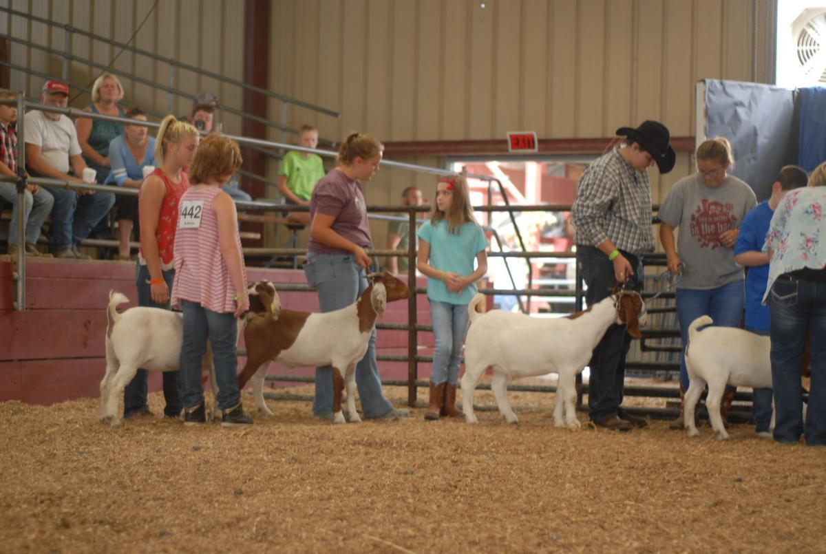 Special-needs children participate in goat show | Journal