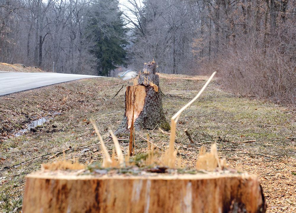 Allerton-trees_6700.jpg