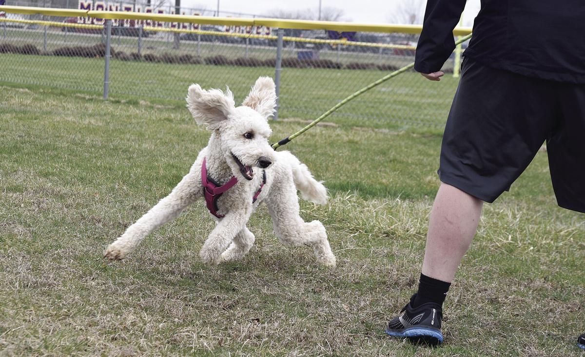 Doggie Daycare Layla