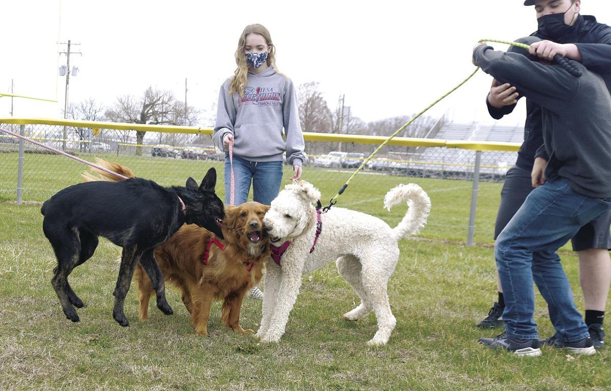 Doggie Daycare group