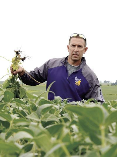 Soybean yields