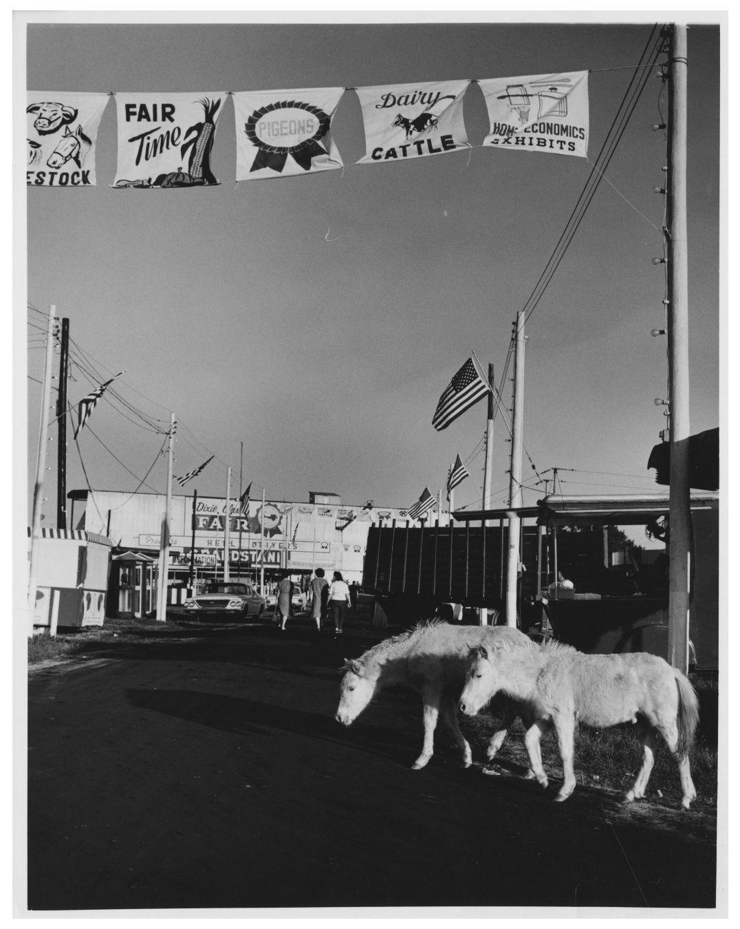 Dixie Donkeys.jpg