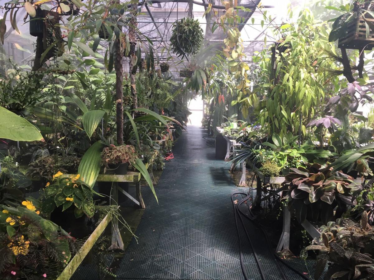 Huntington Botanical Gardens Has Impressive Orchid Collection