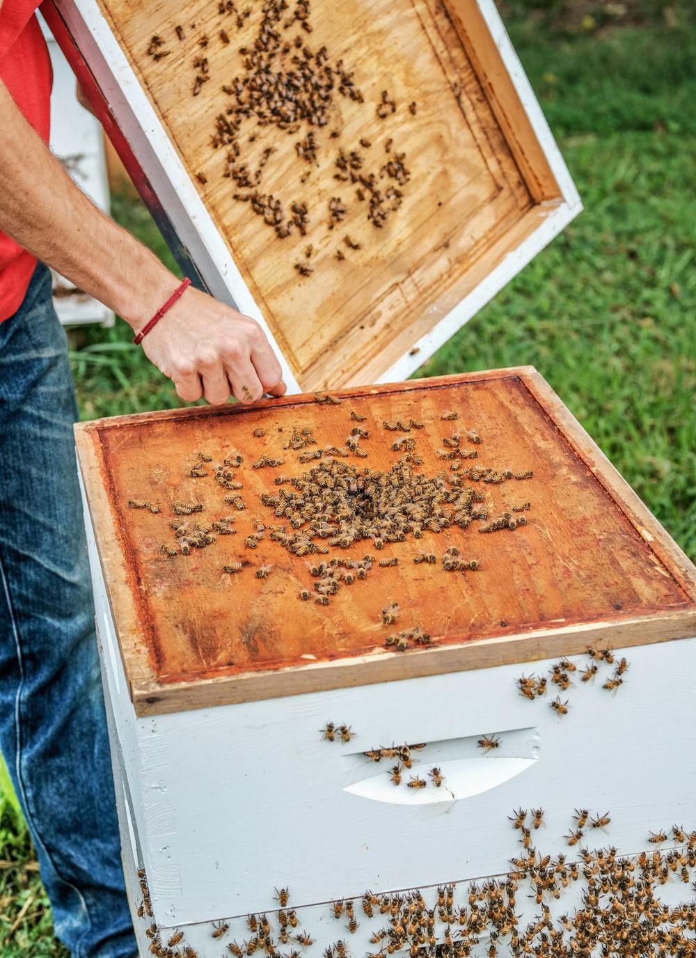 Apple Green Farm Honey