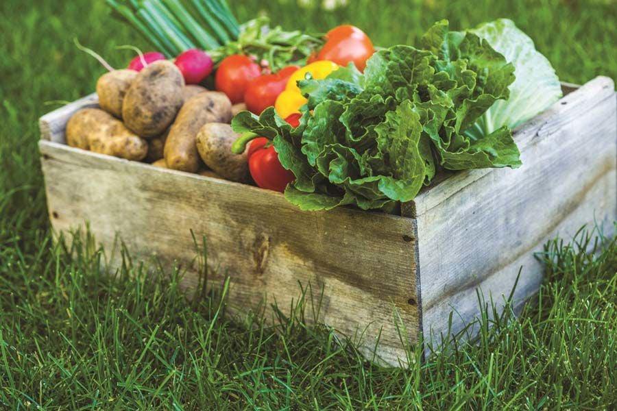 Produce Box Generic