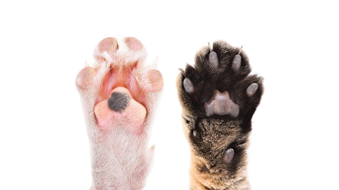 Dr. Fox: Do cats enjoy massages?