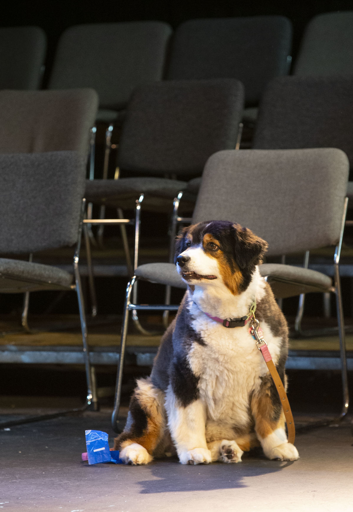 "Dogs audition for the part of Sandy in the musical ""Annie"""
