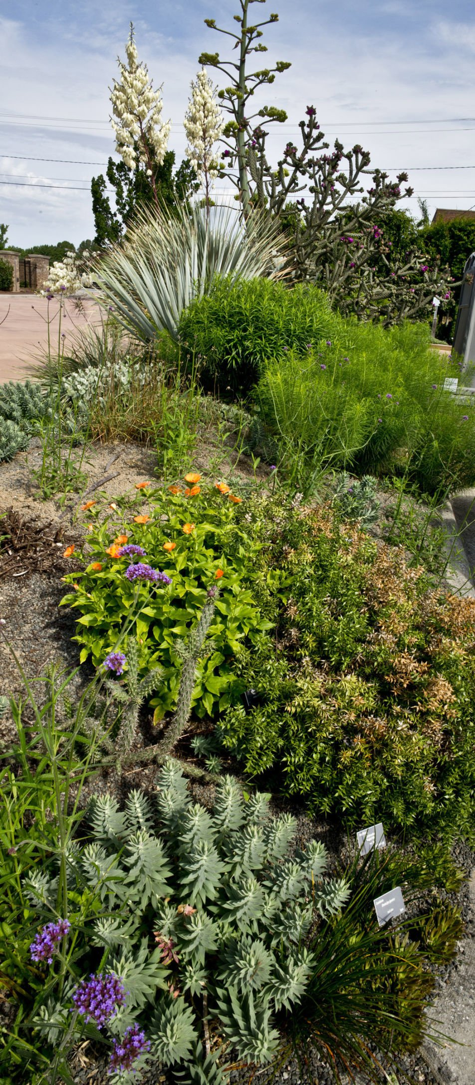 Low Moisture, Drought Tolerant Gardens Are Easy To Grow In Our Area