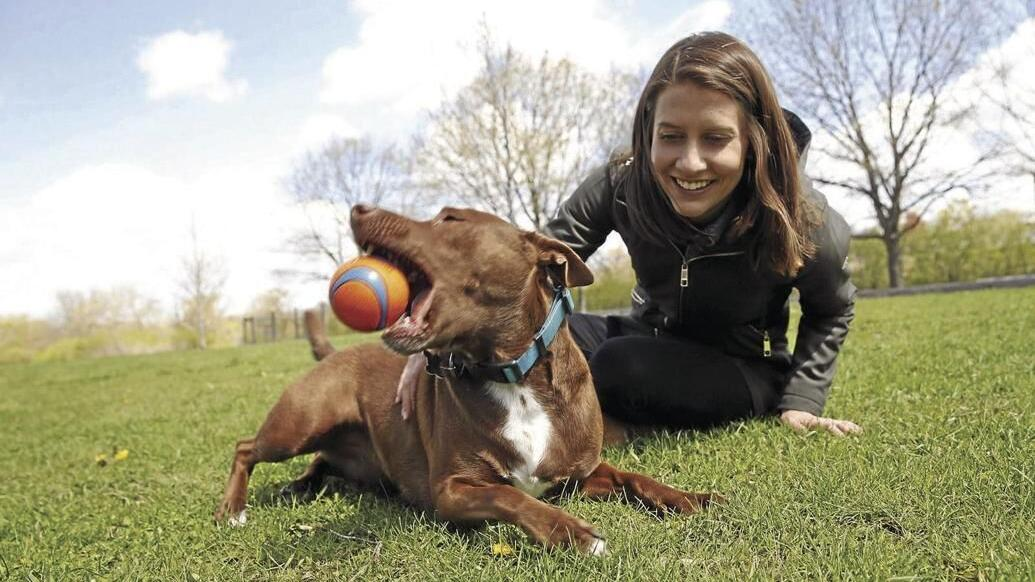 Speech pathologist shows how to teach your dog to 'talk'