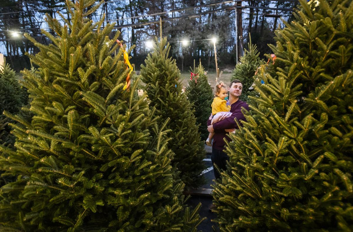 Christmas Tree Shortage North Carolina 2020 Christmas trees plentiful in Winston Salem area. Prices range from
