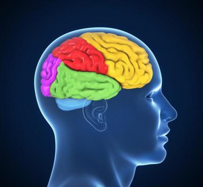human brain 3d illustration (copy)