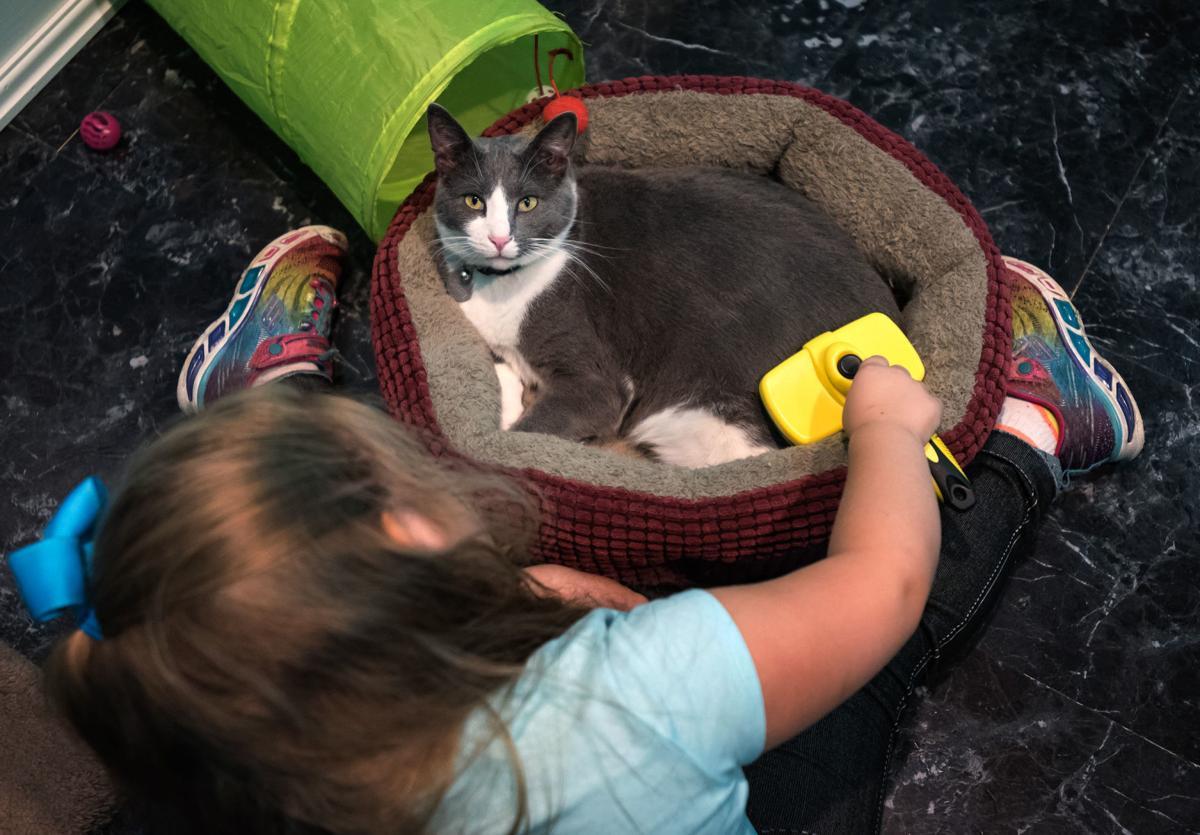 Cat Cafe Kernersville